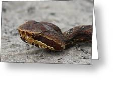 Cottonmouth Greeting Card