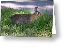 Cottontail Rabbit In My Front Yard Greeting Card