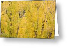 Cottonwood Autumn Colors Greeting Card