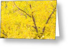 Cottonwood Colors  Greeting Card