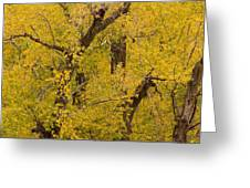 Cottonwood Fall Foliage Colors Greeting Card