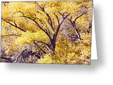 Cottonwood Golden Leaves Greeting Card