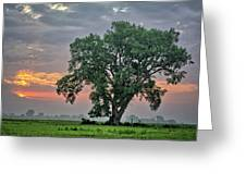 Cottonwood Pasture 2 Greeting Card