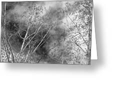 Cottonwood Skies Greeting Card