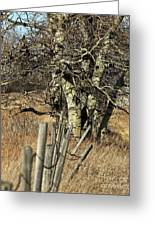 Cottonwood Stand Greeting Card