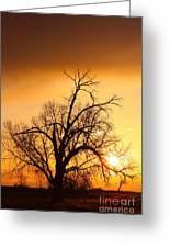Cottonwood Sunrise - Vertical Print Greeting Card