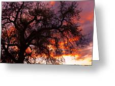 Cottonwood Sunset Silhouette Greeting Card
