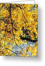 Cottonwood Tree Along The River Greeting Card