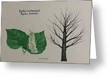 Cottonwood Tree Id Greeting Card