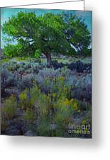 Cottonwood Tree In Old Field Greeting Card