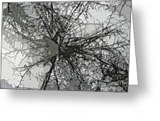 Cottonwood Tree Montage Greeting Card