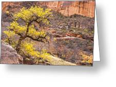 Cottonwood Tree With Vibrant Autumn Colour, Zion National Park, Utah Usa Greeting Card