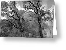 Cottonwood Trees-zion Greeting Card