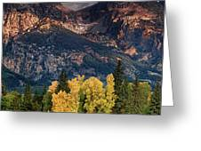 Cottonwoods Fir Trees Fall Color Grand Tetons Nat Greeting Card by Dave Welling