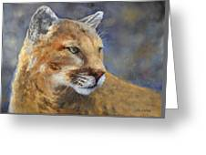 Cougar Greeting Card by Debra Mickelson