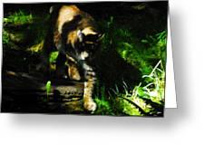 Cougar Eyes Greeting Card
