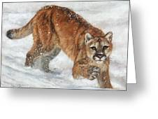 Cougar In The Snow Greeting Card