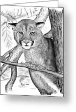 Cougar In Tree Greeting Card