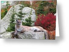 Cougar On Rock Greeting Card