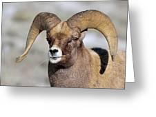Country Boy Ram Greeting Card