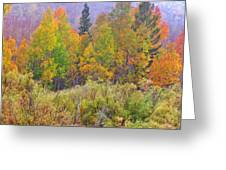 Country Colors Greeting Card