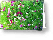 Country Cosmos Greeting Card
