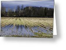 Country Living Eh Greeting Card