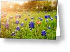 Country Wildflowers Greeting Card