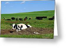 Countryside Cows Greeting Card