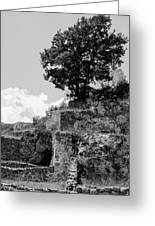 Countryside Of Italy Bnw 2 Greeting Card