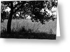 Countryside Of Italy Bnw Greeting Card