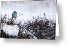 Couple Chilly Bluebirds Greeting Card