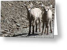 Couple Of Cuties- Baby Bighorn Greeting Card
