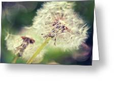 Couple Of Dandelion  Greeting Card
