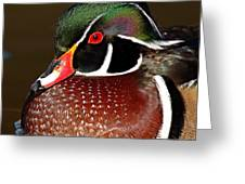 Courtship Colors Of A Wood Duck Drake Greeting Card