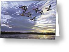 Courtship Flight Greeting Card