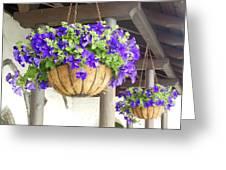 Courtyard Petunias Greeting Card