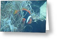 Cousin Of Nemo Greeting Card