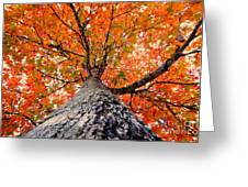 Covered In Fall Greeting Card