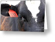 Cow 138 Greeting Card