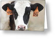 Cow 438 Greeting Card