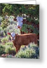 Cow And Calf Greeting Card