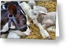 Cow And Lambs Greeting Card