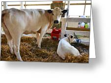 Cow And Little Calf Greeting Card