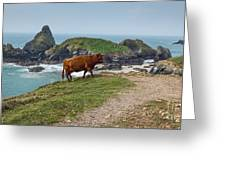 Cow At Kynance Cove Greeting Card