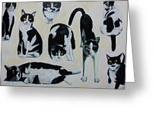 Cow Cats Greeting Card