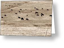Cow Droppings Greeting Card