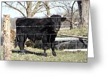Cow Eating  Greeting Card