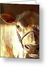 Cow Face Greeting Card by Tam Ishmael - Eizman