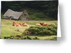 Cow Family Pastoral Greeting Card